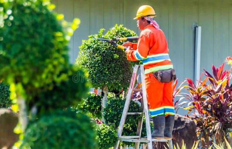 Élagage d'arbres pendant le matin images libres de droits