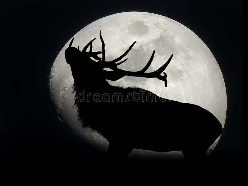 Élans bloquant la lune images libres de droits