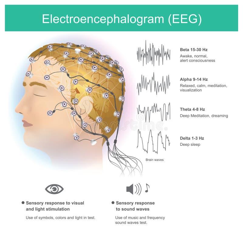 Électroencéphalogramme EEG Esprit humain d'anatomie illustration stock