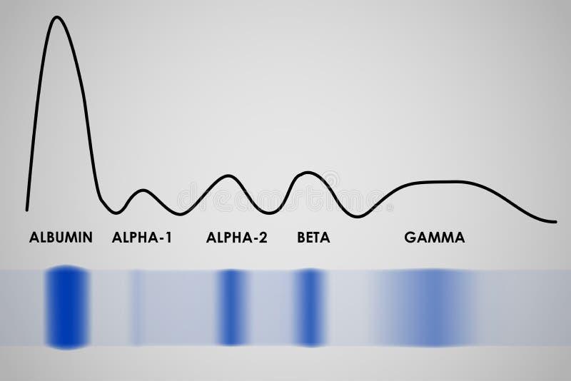 Électrophorèse de protéine de sérum sanguin illustration stock