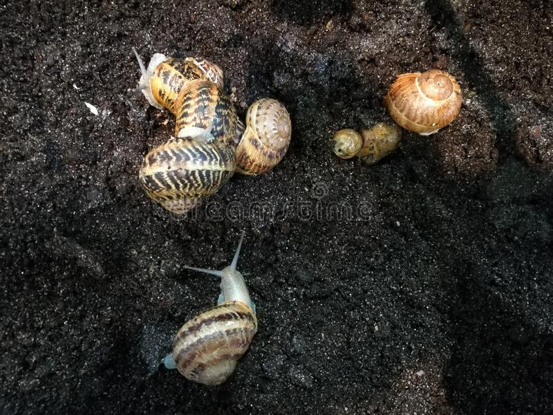 Élevage d'escargot photos stock