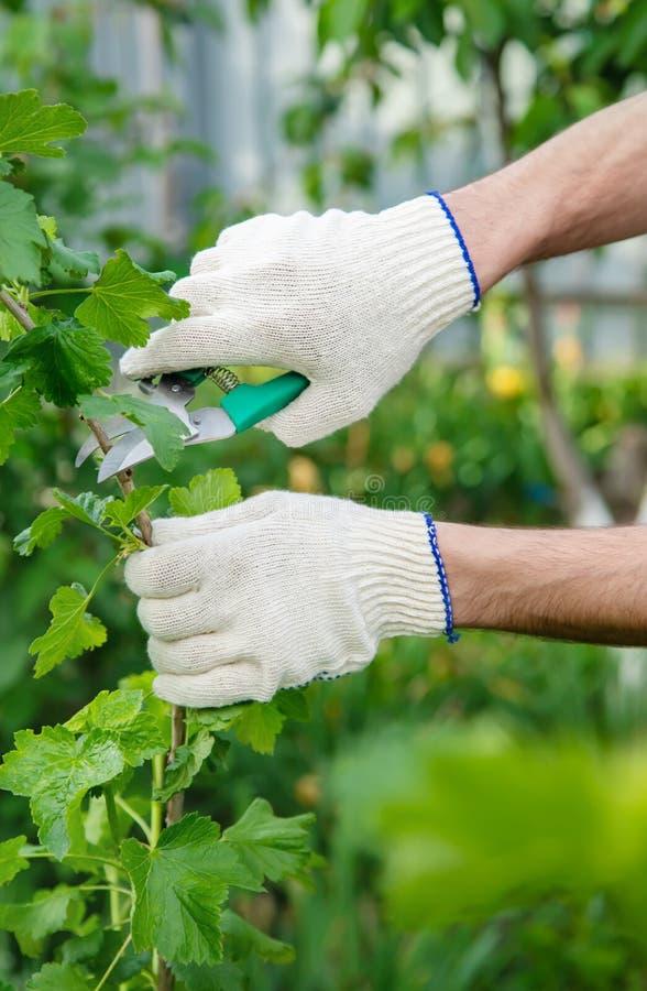 Élevage de jardinier arbustes Jardin Focalisation sélective photos libres de droits