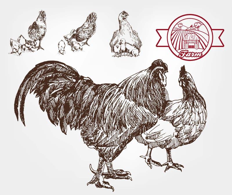 Élevage de volaille illustration libre de droits