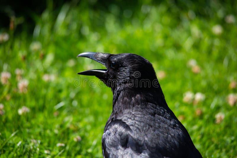 Éloge dans le jardin, animal photo libre de droits