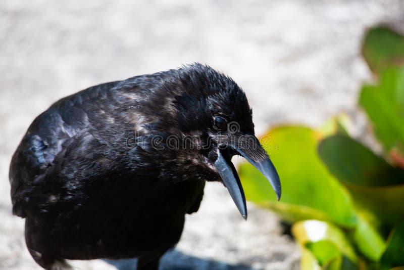 Éloge dans le jardin, animal photographie stock libre de droits