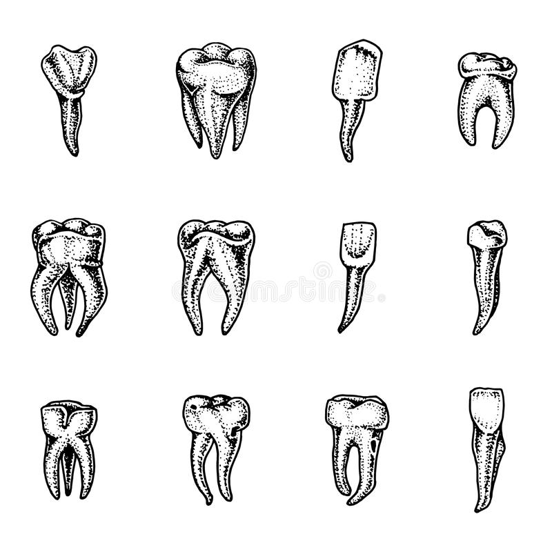 Émail des dents molaire, ensemble dentaire travail du dentiste et du soin pour des enfants cavité buccale propre ou sale santé ou illustration stock