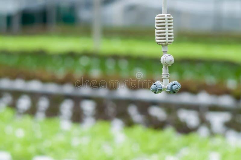 Émetteur accrochant de brume au-dessus des usines de culture hydroponique image libre de droits