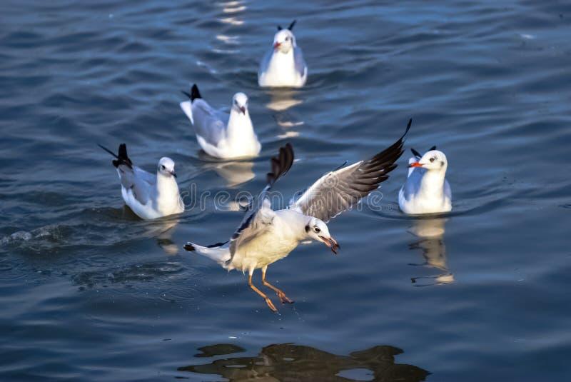 Émigration d'oiseau, photo stock