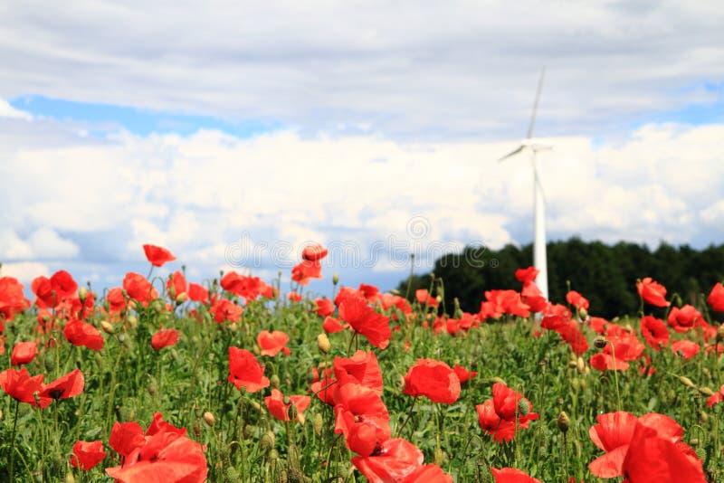 Énergie éolienne et fleurs rouges photos libres de droits