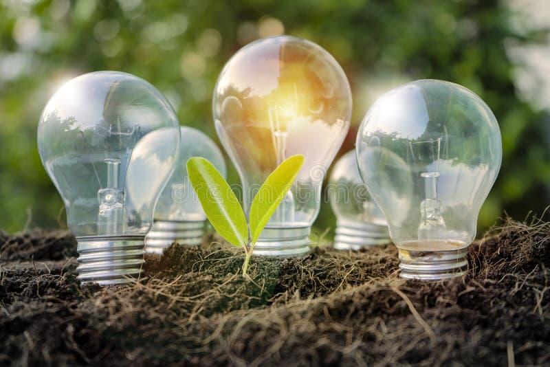 Énergies renouvelables ampoule et petite pousse d'arbres sur un sol au coucher du soleil photo stock