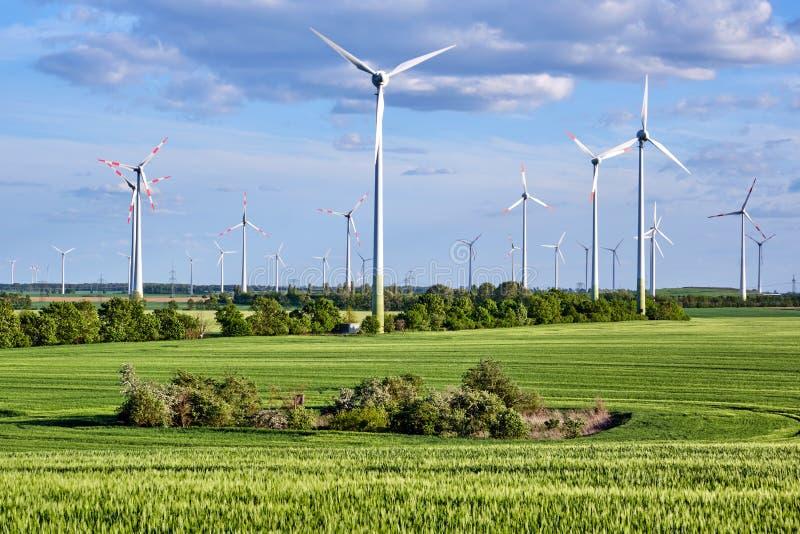 Éoliennes derrière un champ de maïs vert photos stock
