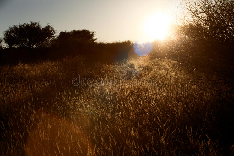 Épanouissement de lentille de Sun sur la lande au coucher du soleil photo libre de droits