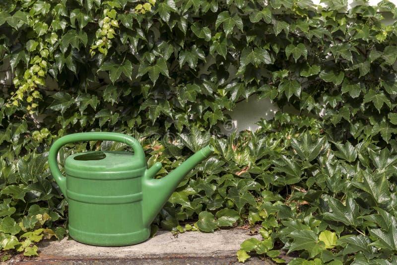 Épargnant vert de l'eau de jardin entre le lierre photographie stock