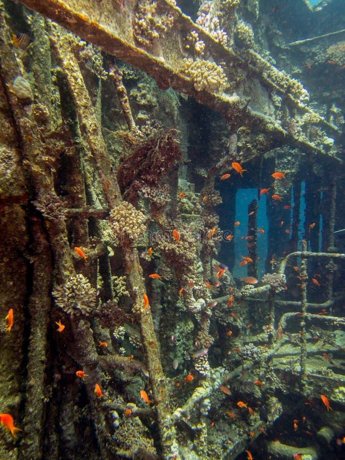 Épave de Chrisoula K au récif d'Abu Nuhas de la Mer Rouge image stock