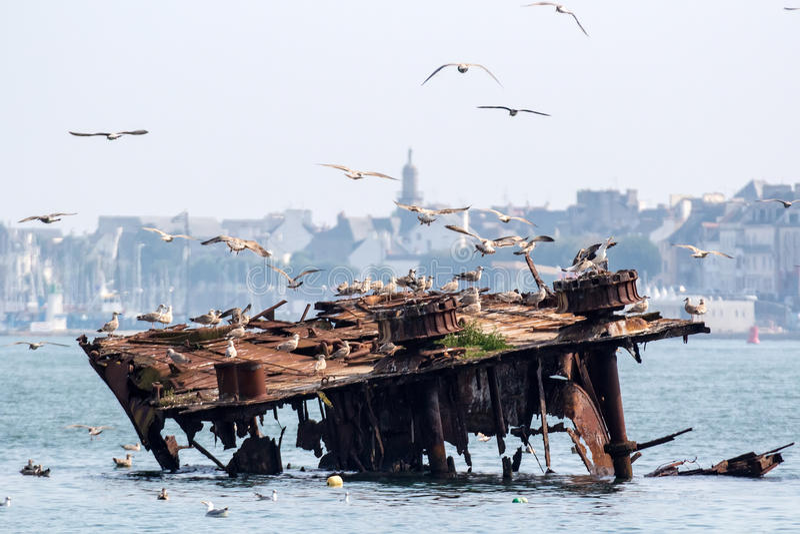 Épave et mouettes de bateau photos stock