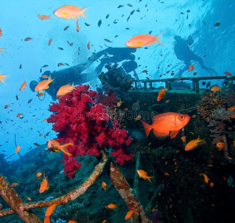 Épave et plongeurs photo stock