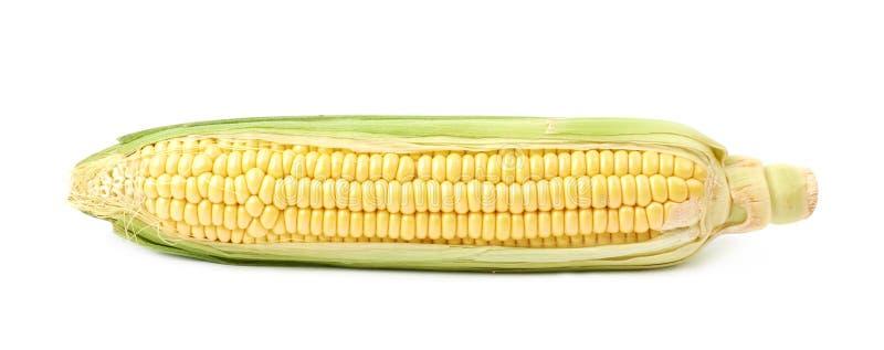 Épi d'épi de maïs de blé d'isolement photo stock