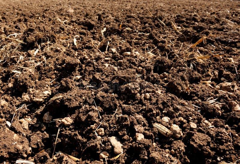 Épi de blé mûr se trouvant sur le champ image stock