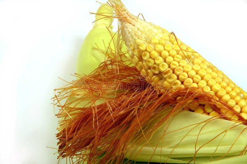 Épi de blé, plan rapproché avec l'espace pour la copie photographie stock libre de droits