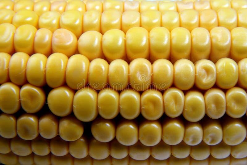 Épi de blé, plan rapproché avec l'espace pour la copie photo libre de droits
