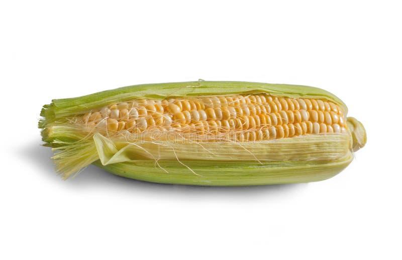Épi de maïs photographie stock