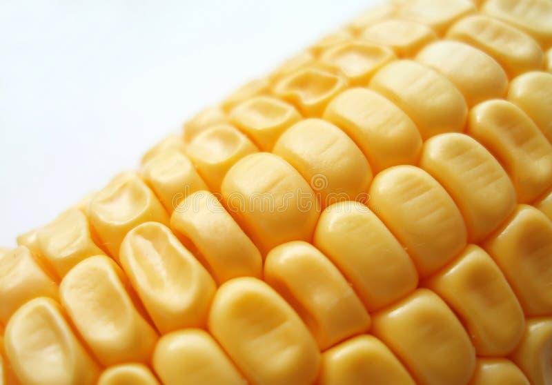 Épi de maïs images libres de droits