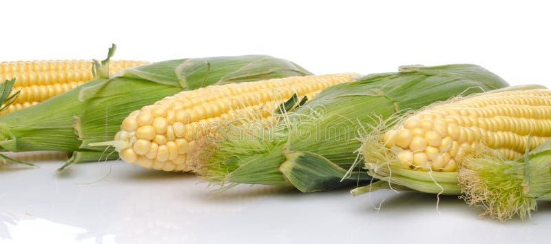 Épi de maïs frais image stock