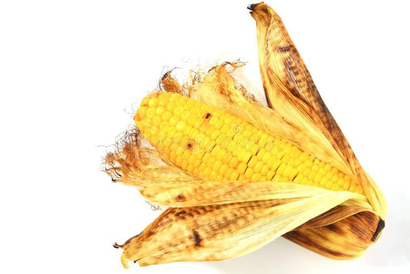 Épi de maïs grillé photo libre de droits