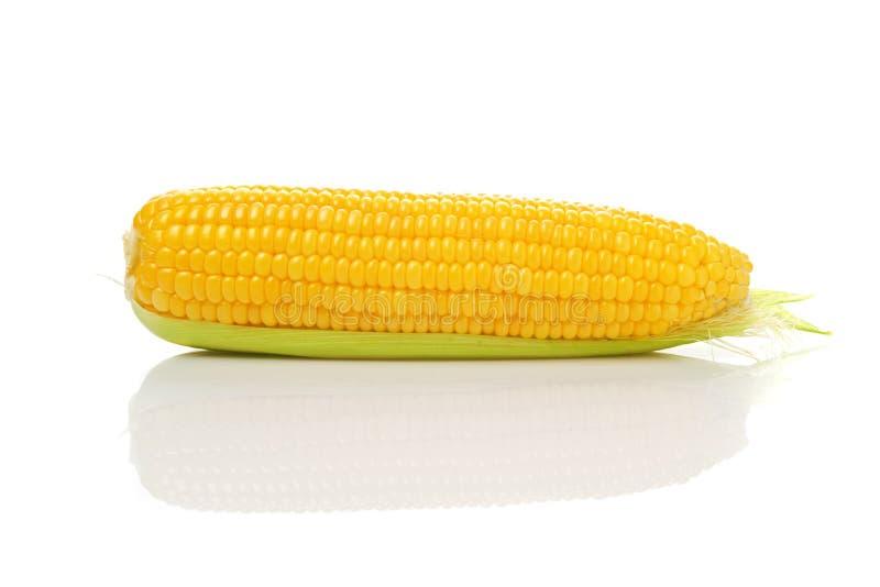 Épi de maïs sur le fond blanc photo stock