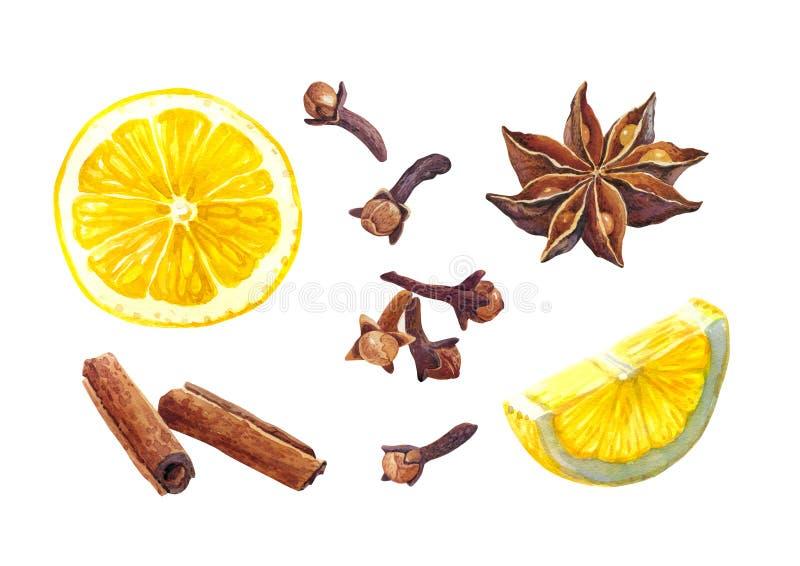 Épices de citron et d'hiver d'isolement sur l'illustration blanche d'aquarelle illustration libre de droits