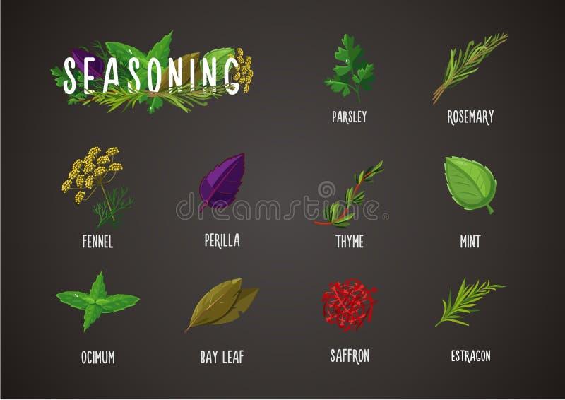 Épices et assaisonnement Cuisson des ingrédients Collection culinaire d'herbes et de plantes illustration de vecteur