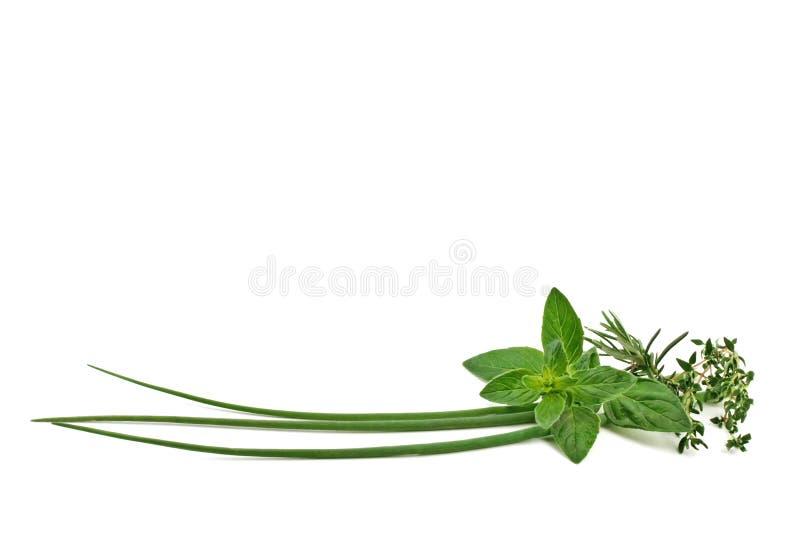 Épices et herbes fraîches images libres de droits