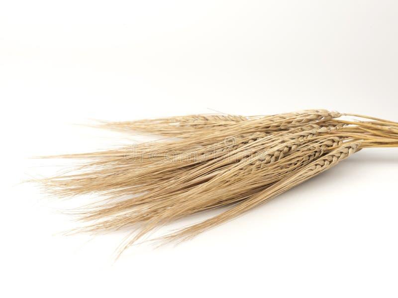 Épillets de blé photos stock