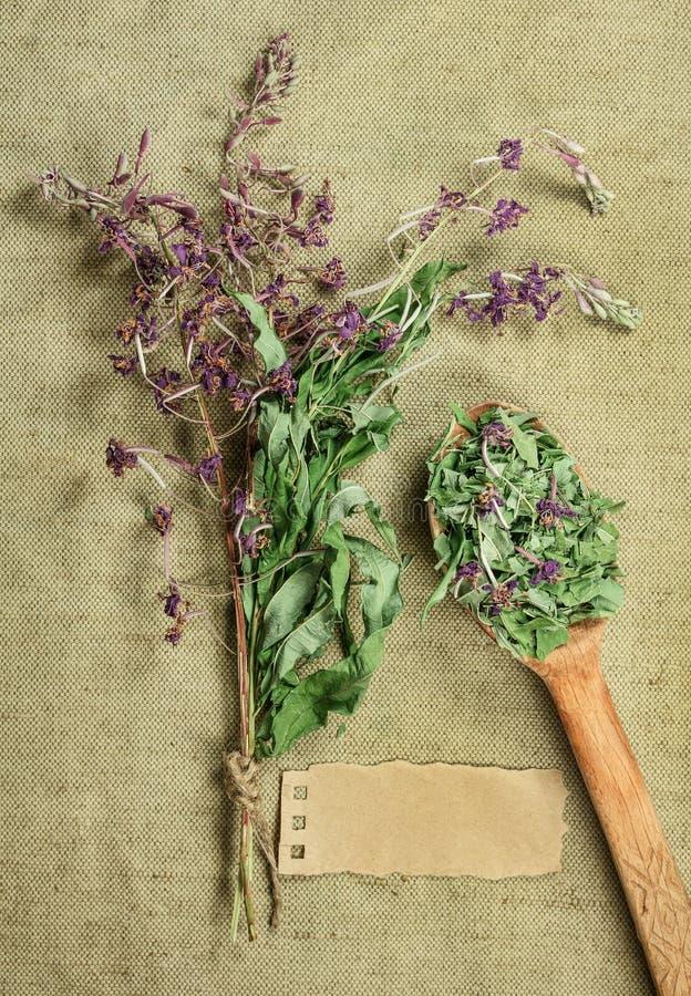 Épilobe Herbes sèches Phytothérapie, h médicinal phytotherapy images stock