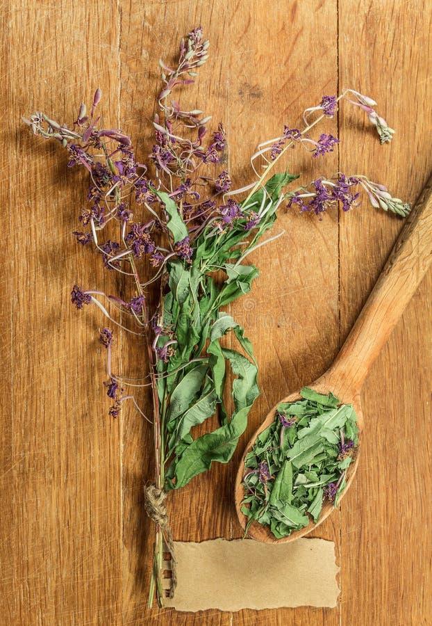Épilobe Herbes sèches Phytothérapie, h médicinal phytotherapy photographie stock libre de droits