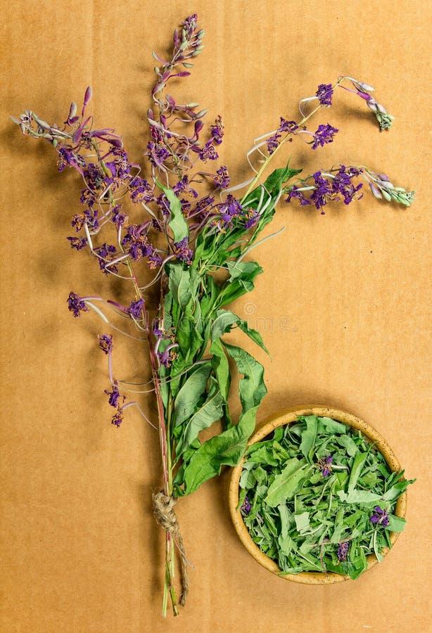 Épilobe Herbes sèches Phytothérapie, h médicinal phytotherapy photo stock