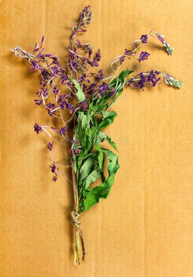 Épilobe Herbes sèches Phytothérapie, h médicinal phytotherapy image libre de droits