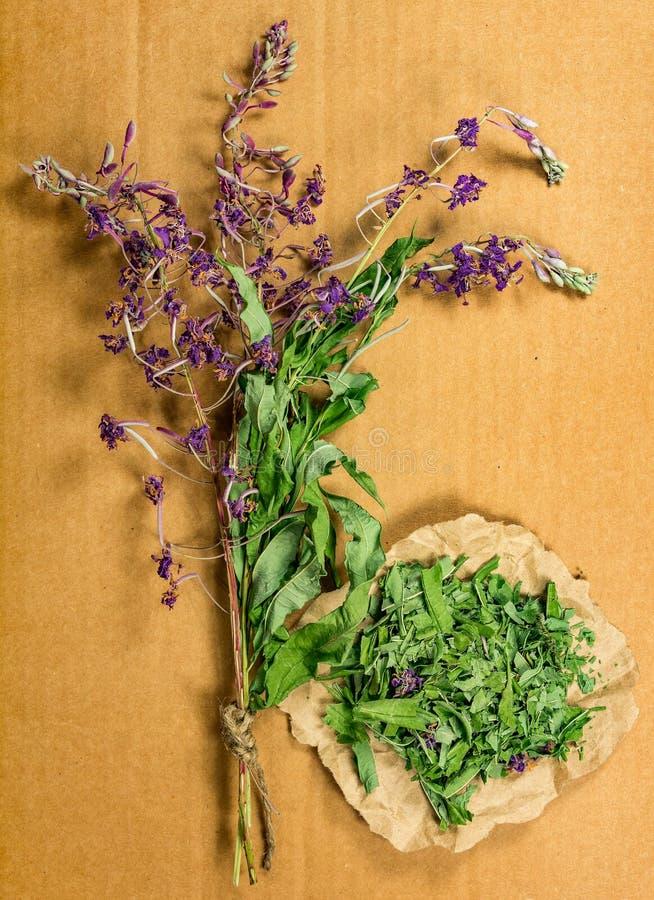 Épilobe Herbes sèches Phytothérapie, h médicinal phytotherapy photos stock