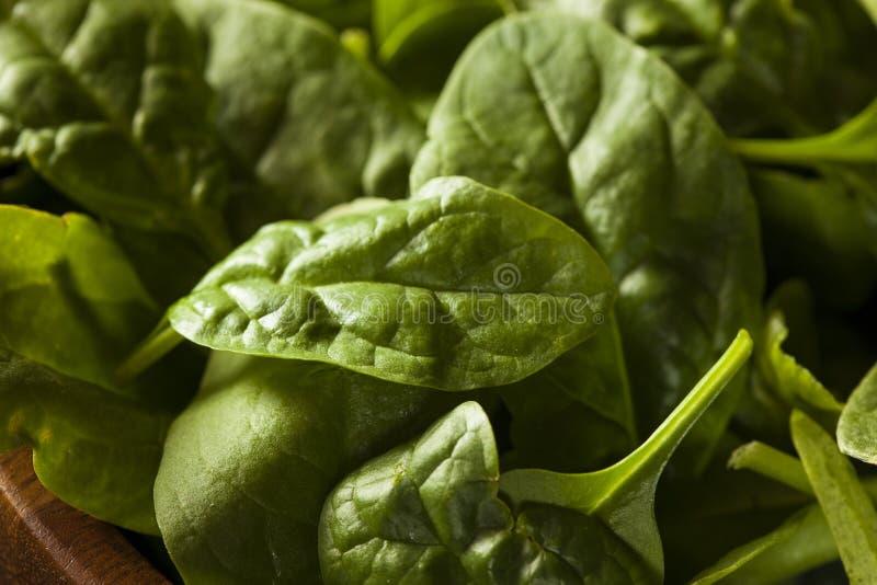 Épinards organiques verts crus de bébé photo libre de droits
