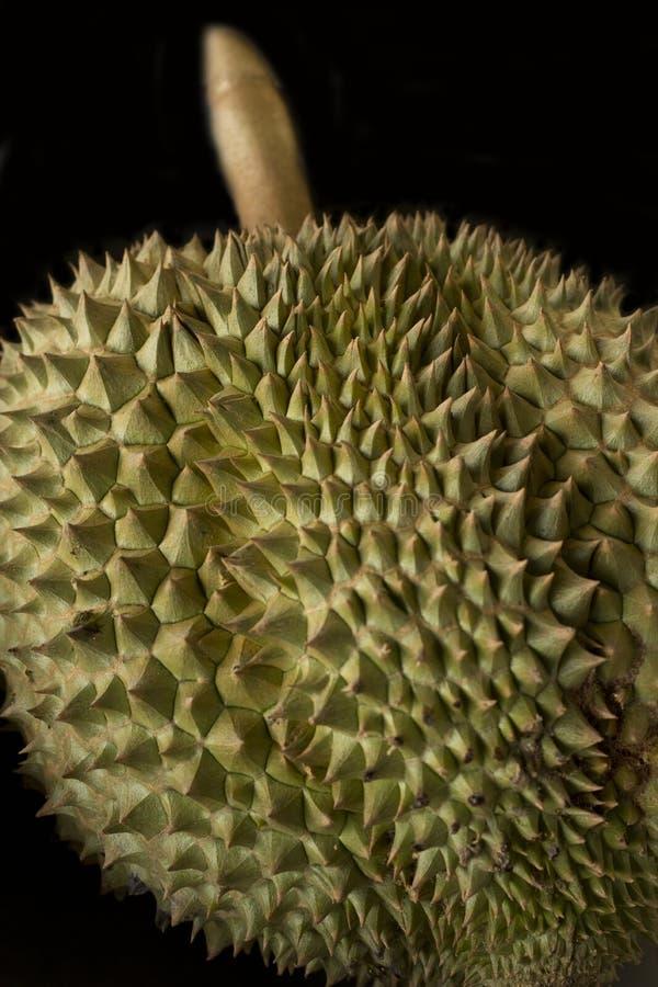 Épines de durian photo stock