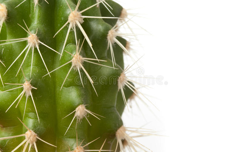 Épines sur le cactus photographie stock libre de droits