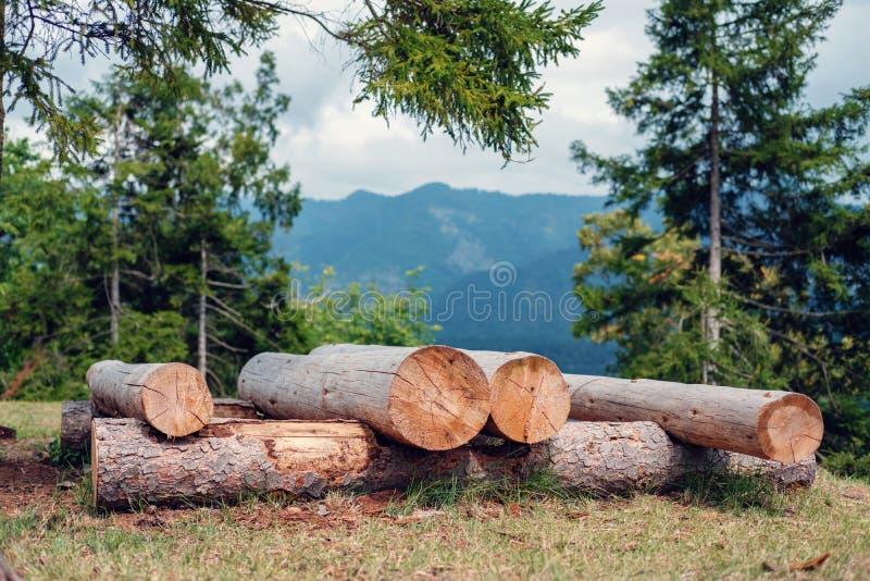 Épinette coupée et empilée Logs dans la forêt avec montagne floue photos libres de droits