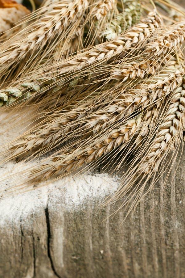 Épis de blé secs image libre de droits
