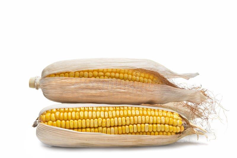 Épis de blé sur un fond blanc photographie stock libre de droits