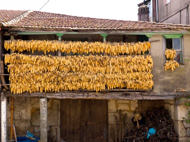 Épis de maïs à sécher dans un balcon traditionnel photographie stock libre de droits
