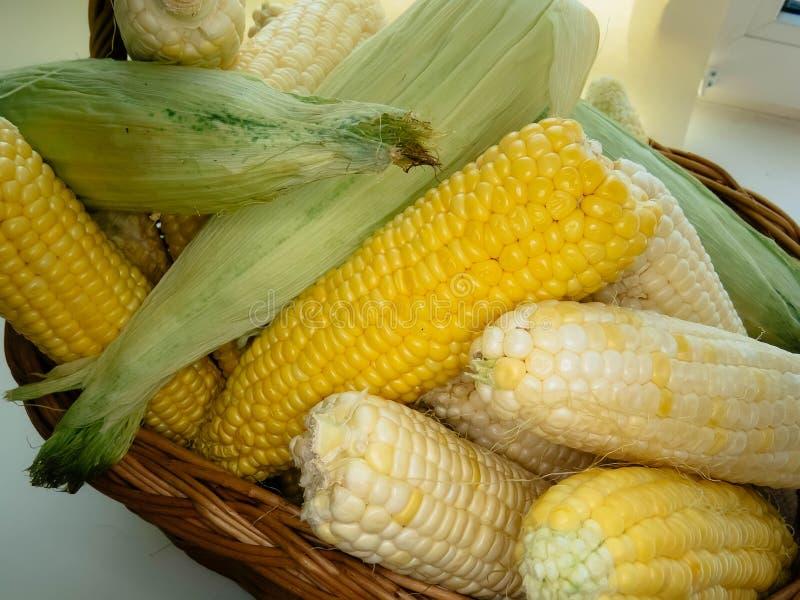 Épis de maïs naturels mûrs dans un panier images stock