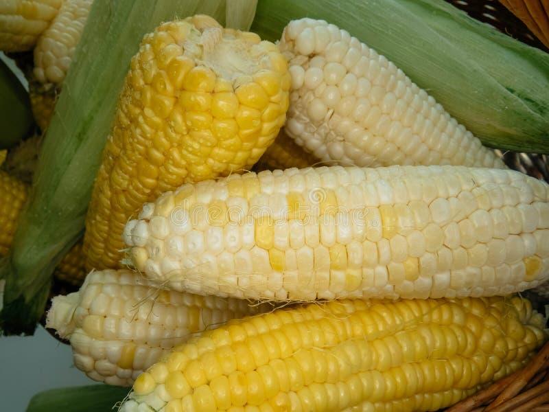 Épis de maïs naturels mûrs dans un panier image libre de droits