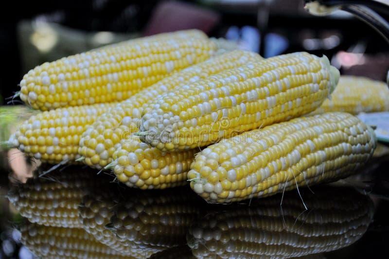 Épis frais de maïs photographie stock libre de droits