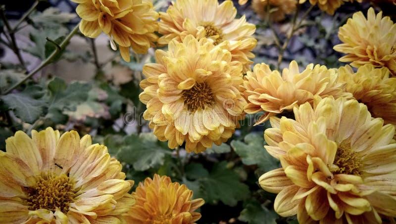 Épouser la fleur dans le jardin photographie stock libre de droits