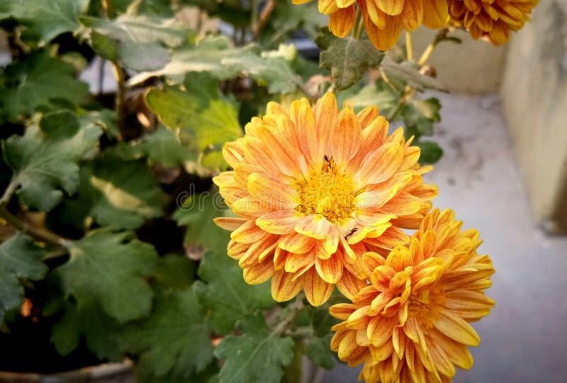 Épouser la fleur dans le jardin images stock